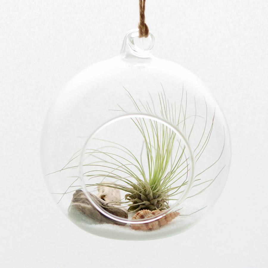 original_beach-themed-air-plant-hanging-terrarium
