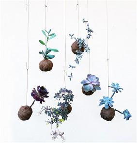 Plant Planets