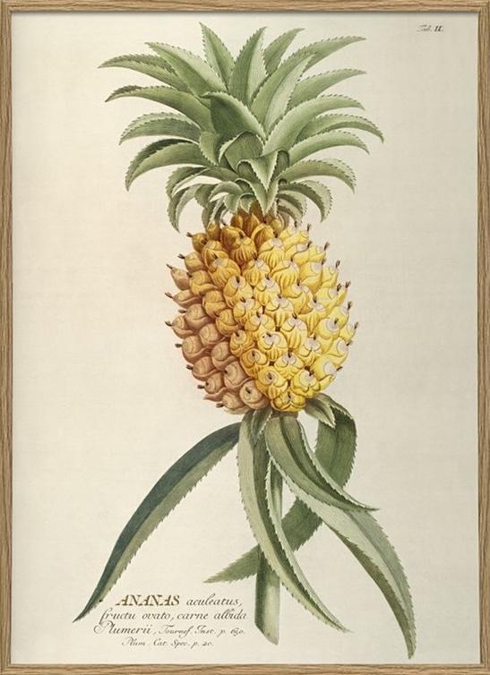 ananas22