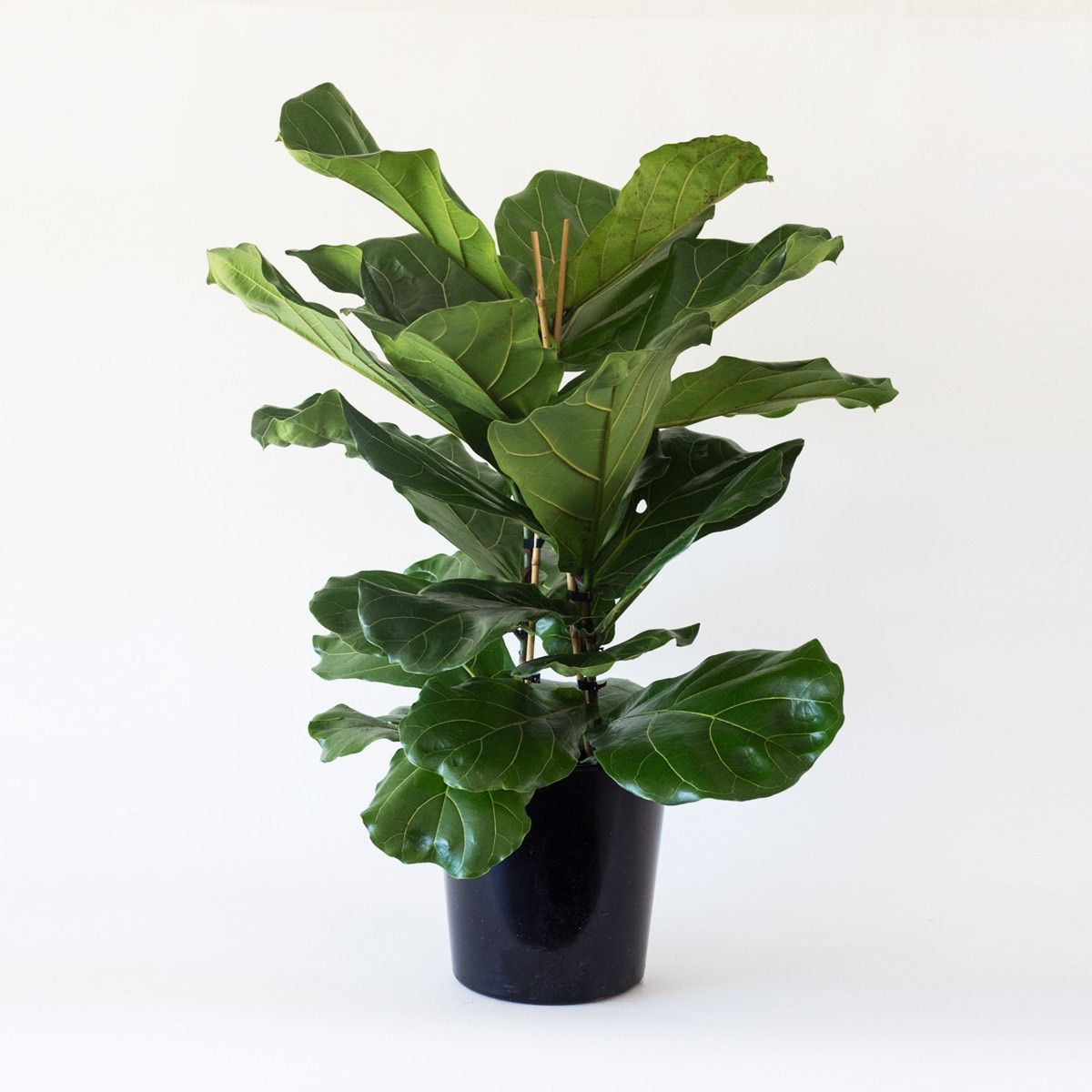 Indoor Natural Lighting For Plants