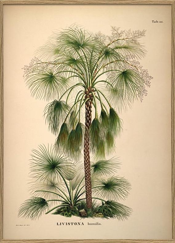 palm22