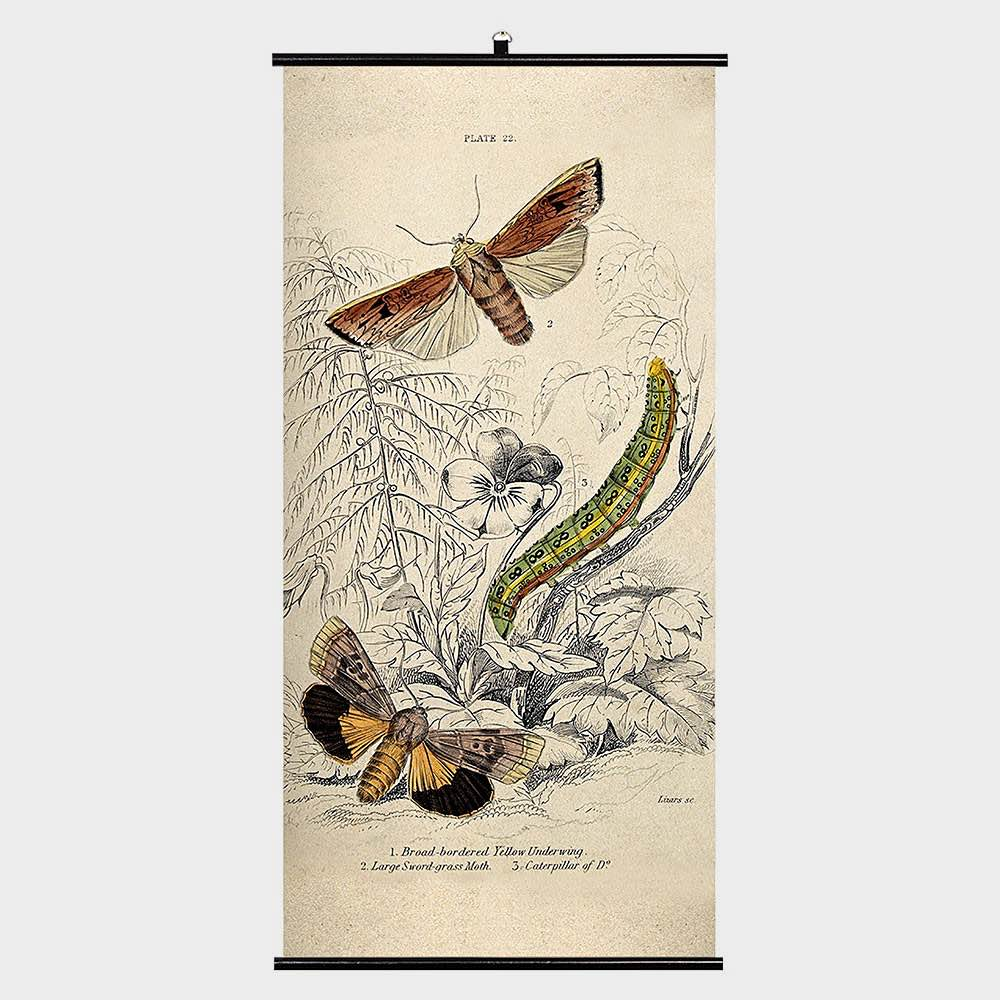 Biologica Wall Chart – Moths