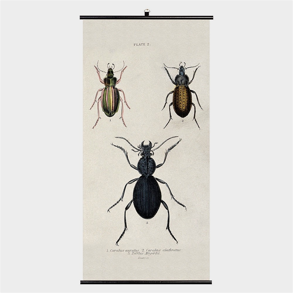 Biologica Wall Chart – Beetles