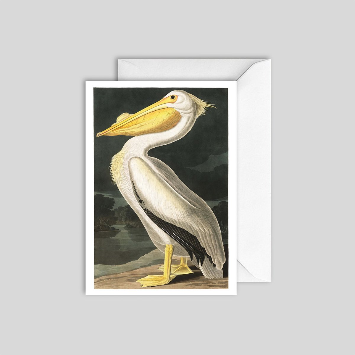 White Pelican Card