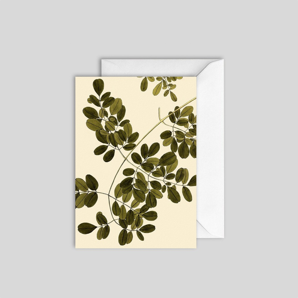 Plant Detail vol.2 Card
