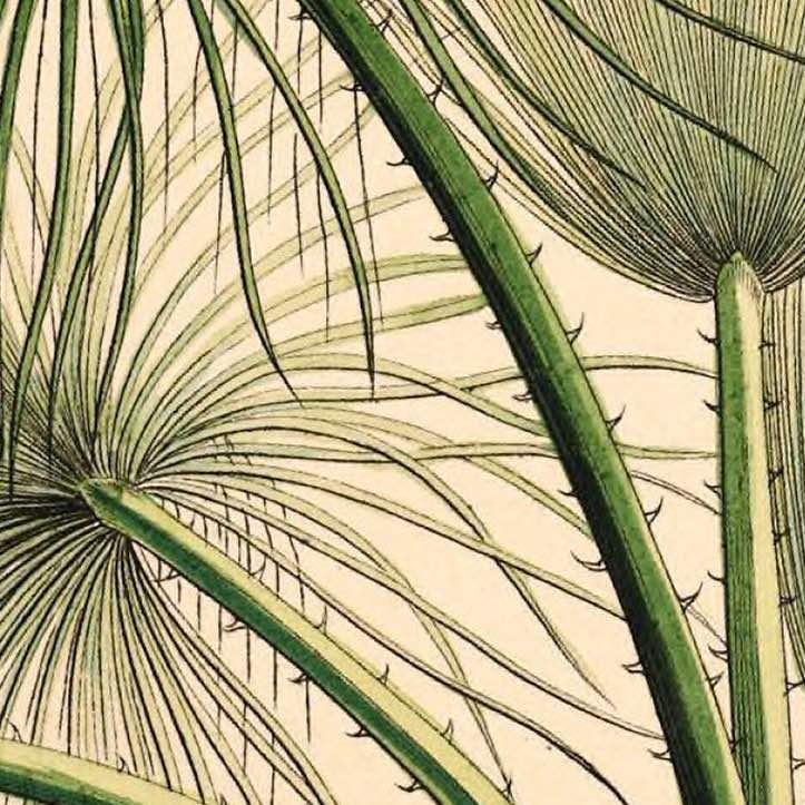 Palm Detail Mini Print vol.1